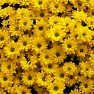 Yellow Crysanthemums by Ludwig Wagner