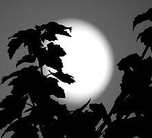 Moon in B&W by Adam Petty