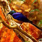 Blue by flyfish70