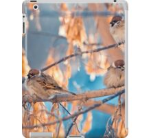 great sparrows in winter time on a branch iPad Case/Skin