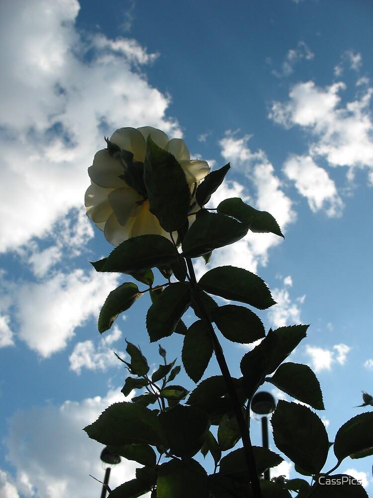 Reach for the Sky by CassPics