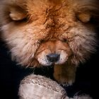 Chow-Chow - The Player by TOM KLAUSZ