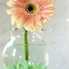 oh pretty by Lori Botelho