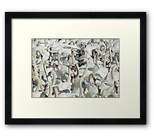 A Whiteness of Swans Framed Print