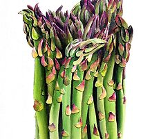 Asparagus by cathy savels