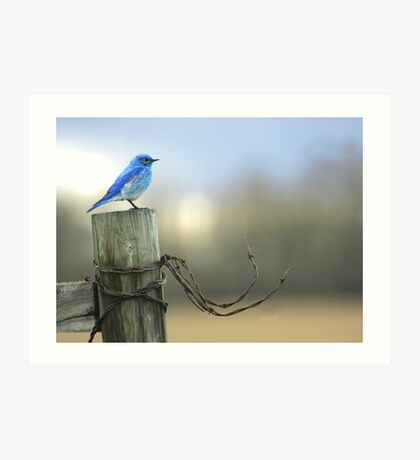 Bluebird on wood and wire Art Print