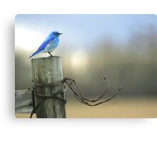 Bluebird on wood and wire Canvas Print