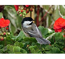 Garden Helper Photographic Print