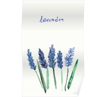 Vector watercolor lavender with blue bright watercolor ribbon. Poster