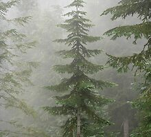 Grouse Mountain Tree by robdu