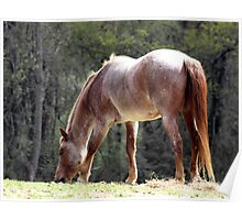 the Silver Back Horse Poster