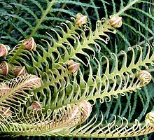 New Curlings of a Fern by Jo Nijenhuis