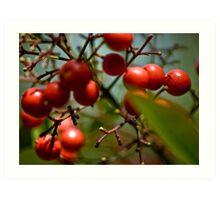 Berry Nice ...... Art Print