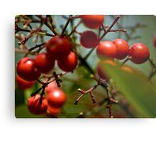 Berry Nice ...... Metal Print