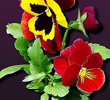 Pansy Family by Susan Savad