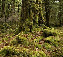 Mossy Woods by Bruce Reardon