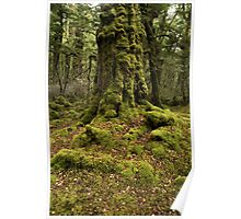 Mossy Woods Poster