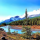 Bow River Near Banff, Alberta by Vickie Emms