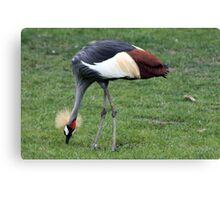 African Crane Canvas Print