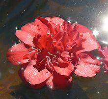 Floating flower by Kazza73