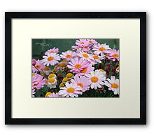 Daisy land Framed Print