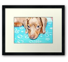 Doggy Love I Framed Print
