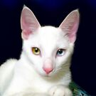 Turkish Angora Wannabe by Christy Taylor