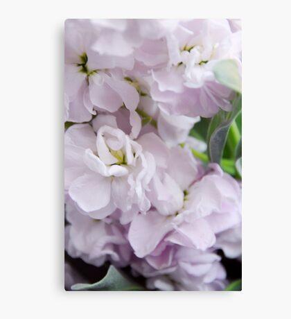 Stock flowers Canvas Print