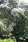 Spring by Evita