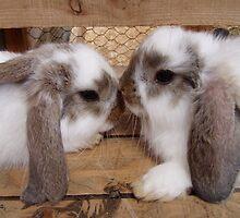 Little Bunnies by missboon