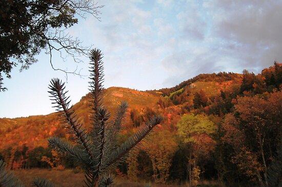 Autumn Splendor by jansnow