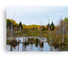 Beaver pond & dam Canvas Print
