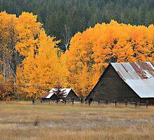 Autumn At The Farm  by MsLiz