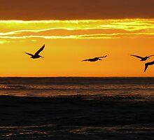 #561    Storks by MyInnereyeMike