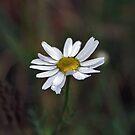 flower by Gregor Pawlak