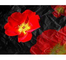 Crumpled Roses Photographic Print
