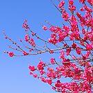 Spring by gypsygirl
