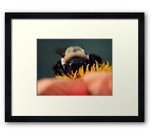 Bee's Eye View Framed Print
