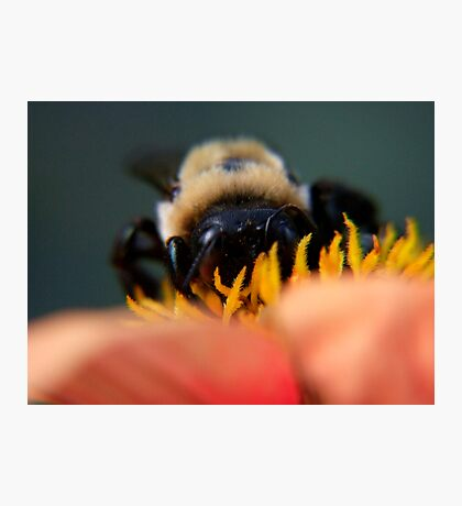 Bee's Eye View Photographic Print