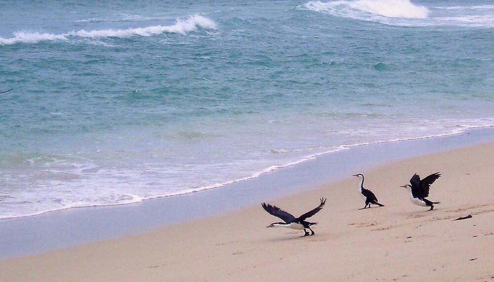 Three cormorants by georgieboy98