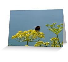 Focus on a bumble bee Greeting Card