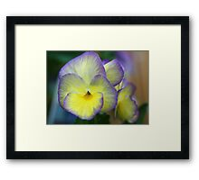 Viola -- Not Just Another Pretty Face Framed Print