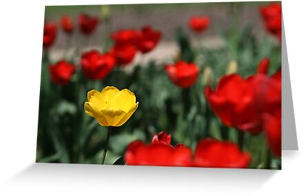Yellow and Red... by Jeff D Photography