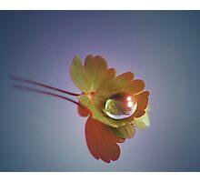 Simplicity Photographic Print