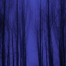 Nightblue Woods by Lena Weiss