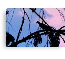 Mourning Dove in Silhouette Canvas Print