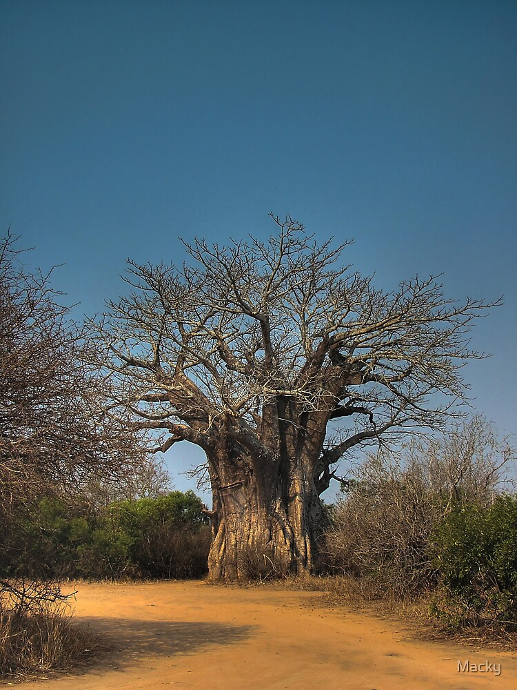 Out of Africa by Macky