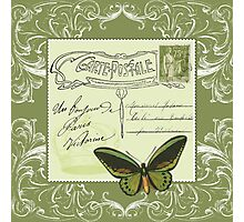 Green postcard Photographic Print