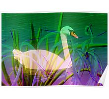 Swan in flowery reeds  Poster