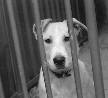 Dog Behind Fence 2 by bigjim232